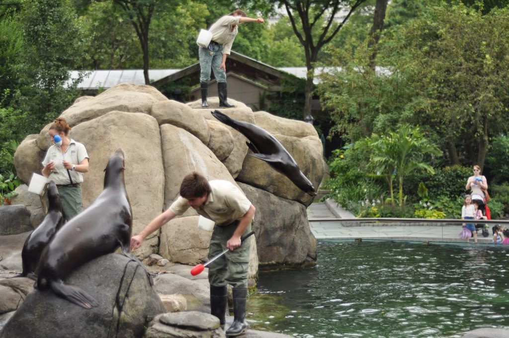 Seals and zoo keepers at the Central Park Zoo, one of the kid friendly activities in New York City