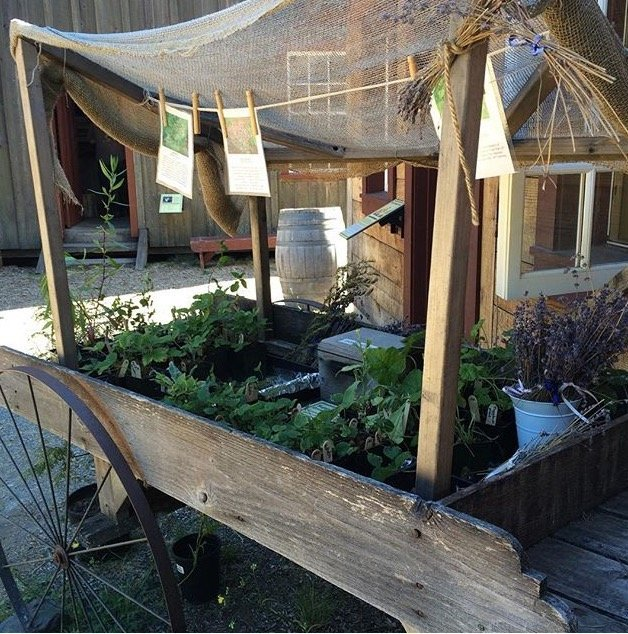 An herb stand in Fort Nisqually in Tacoma, Washington, a family-friendly destination for Seattle day trips