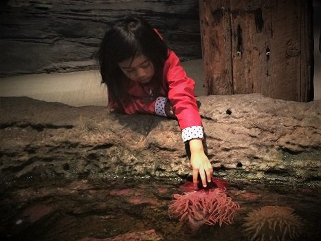 A child petting a sea anemone at an aquarium during a staycation with kids