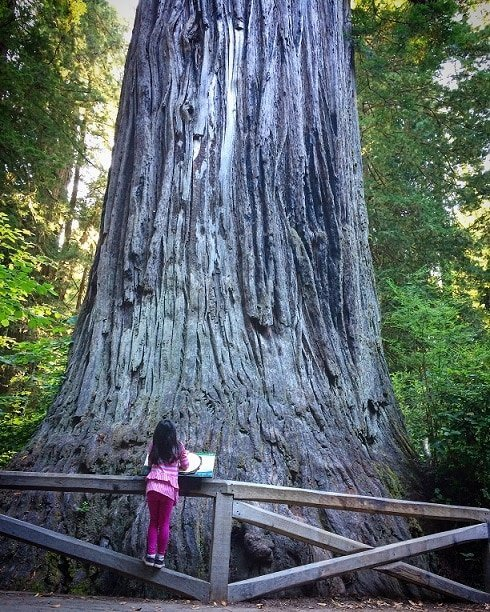 A child in front of the Big Tree at Redwood National Park, visiting the Redwoods with kids