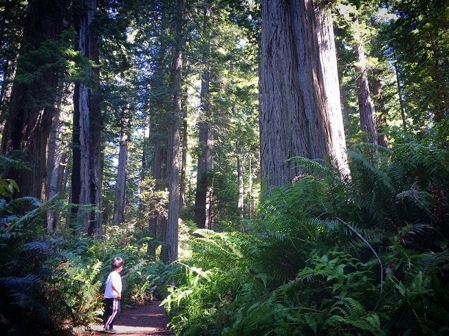 A child at Redwood National Park, experiencing the Redwoods with kids
