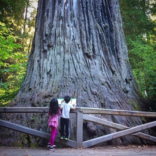 Children exploring nature at Redwood National Park