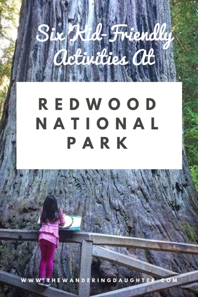 Redwoods With Kids! Kid-Friendly Ideas For Visiting Redwood National Park | The Wandering Daughter