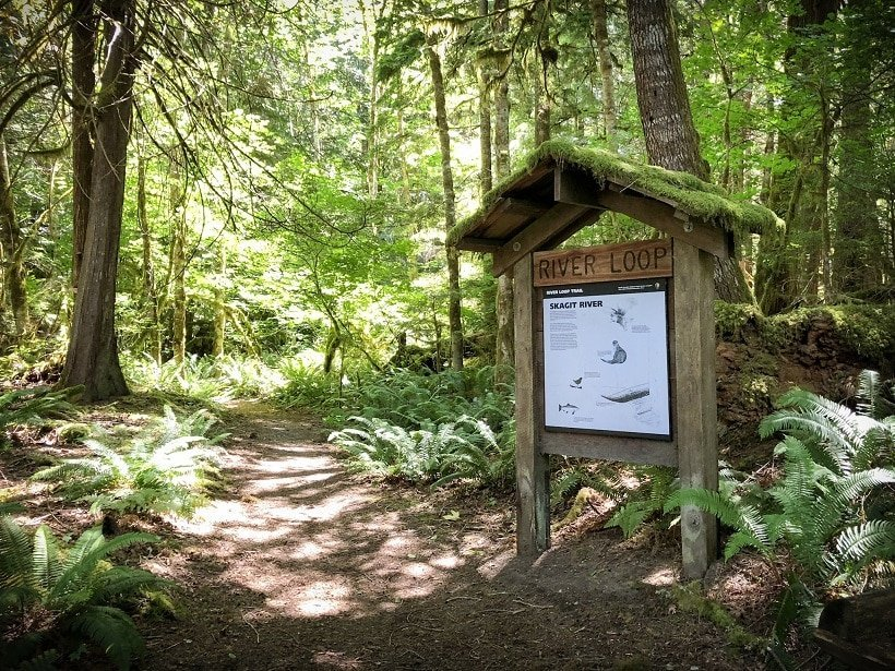 River Loop Trail, one of the hikes at North Cascades