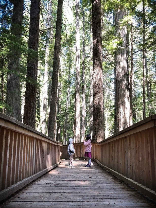 Kids playing on a wooden trail at North Cascades National Park, one of the national parks in the west