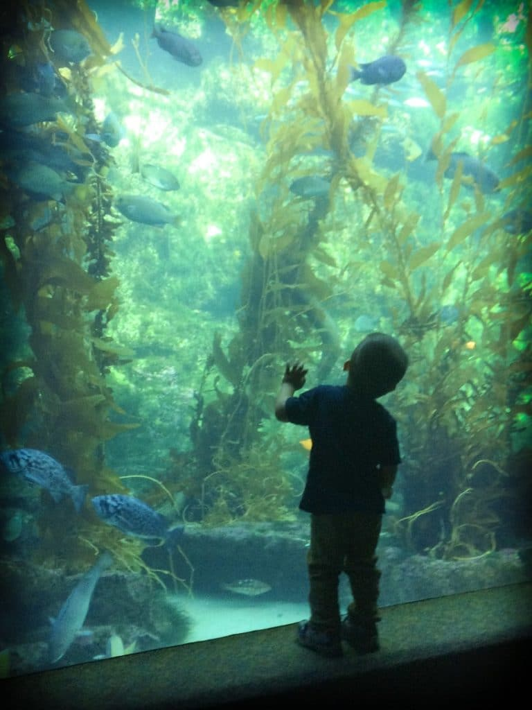 A child looking at fish at Birch Aquarium, an idea for San Diego activities with kids