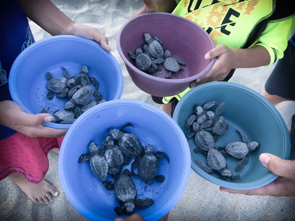 Releasing baby sea turtles on Puerto Escondido beaches