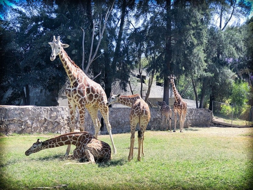Family-friendly things to do in Guadalajara with kids