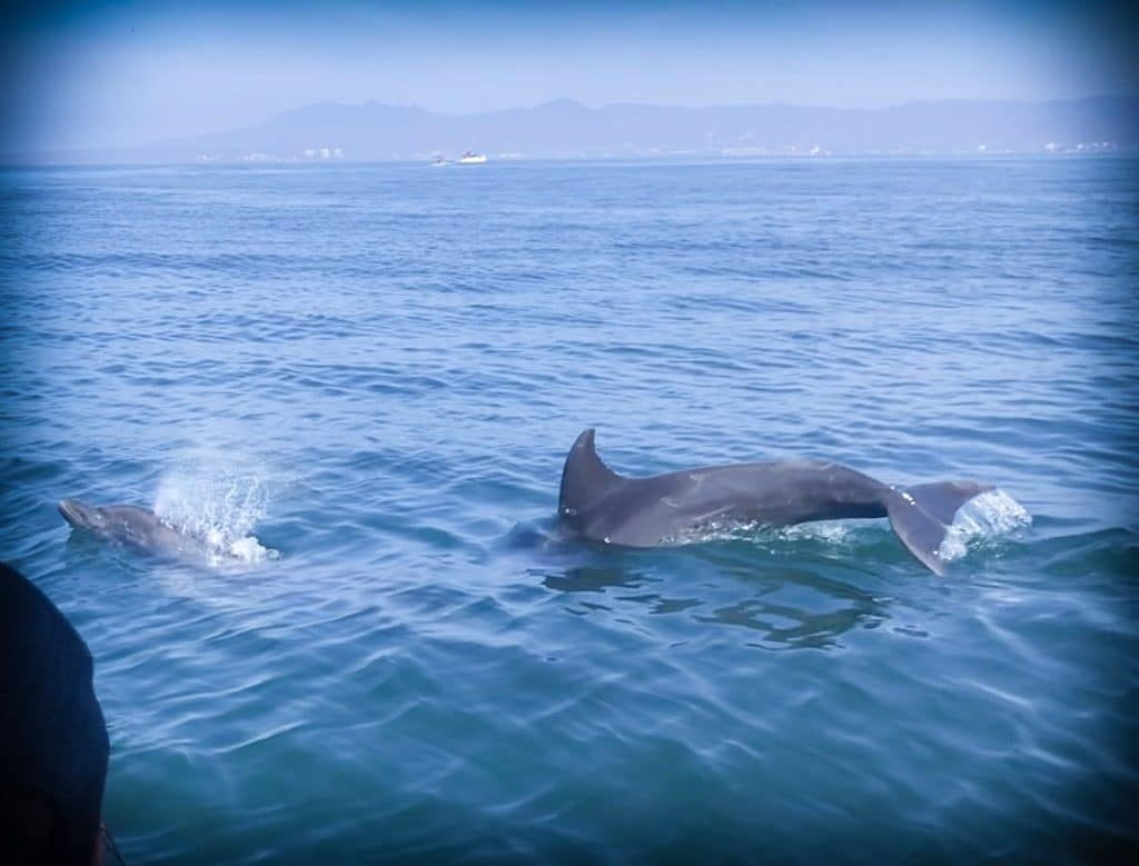 Swimming with wild dolphins in Puerto Vallarta, Mexico