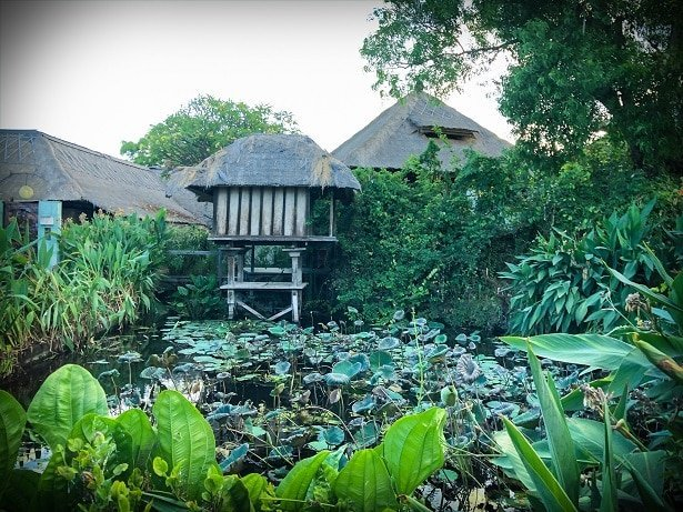 A pond filled with lily pads at a Bali eco stay in Padang Bai, Bali