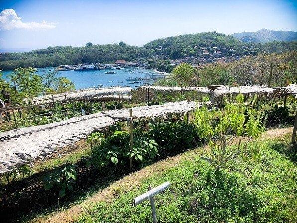 An organic garden at a Bali eco stay in Padang Bai, Bali, Indonesia