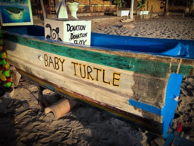 Baby sea turtle release stand in Senggigi Beach, one of the many things to do in Lombok