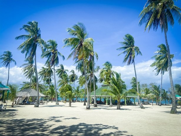 Coconut trees at Cowrie Island, a stop during a Puerto Princesa itinerary in the Philippines