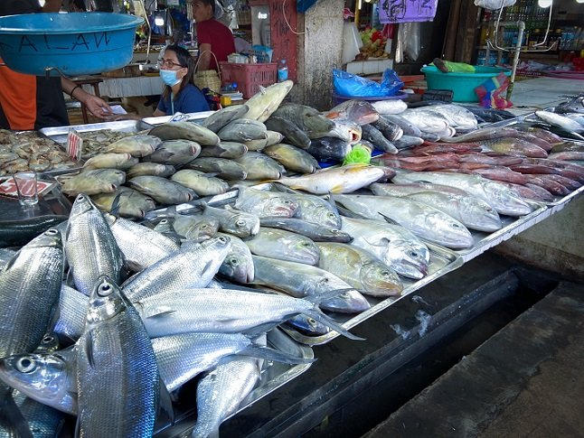 A display of fresh fish for sale from a vendor at San Jose New Market, a stop during a Puerto Princesa itinerary in the Philippines