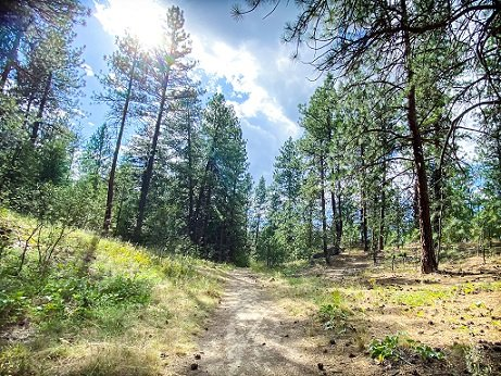Evergreen trees and a dirt trail at Dishman Hills Natural Area, a popular spot for hiking in Spokane, WA