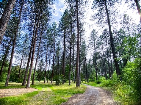 Trees at Finch Arboretum and a dirt trail, an option for urban hiking in Spokane